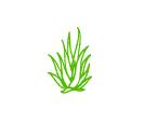 Art design of aloe vera plant
