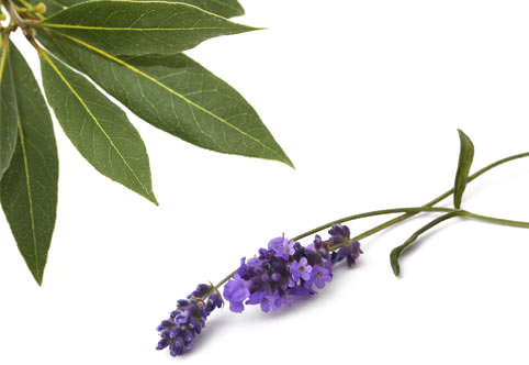 Ash Bay Laurel leaves and Lavender flowers, ingredients